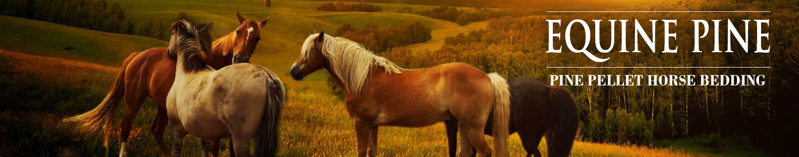 equine pine page header